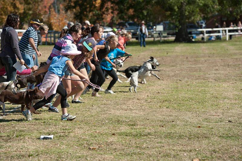 Annual Nundle Dog Race